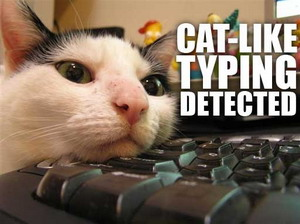 cat-typing