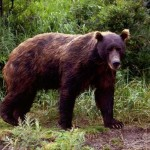 Toughest man alive, 80, kicks and headbutts attacking brown bear