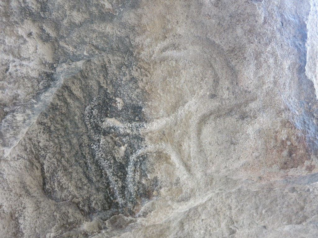 Cave carving of goat, Gobustand National Park