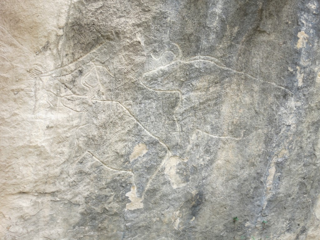 Cave carving of two bulls, Gobustand National Park